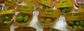 variety of mangoes in dilli haat