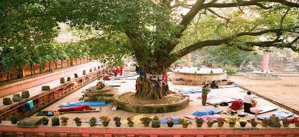 bodhi tree in bodh gaya