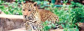 Tata Zoo Main Attraction , Facility , Entry price , entry time