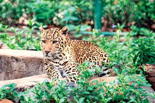 Tata Steel Zoological Park Jamshedpur Timing Entry Fees Location
