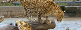 delhi zoo images
