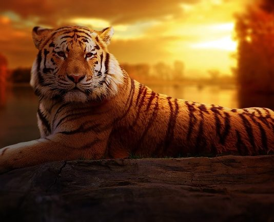 delhi zoo images, location
