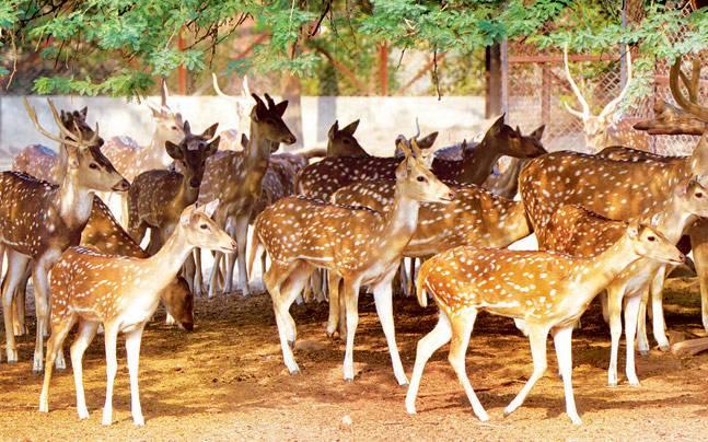 delhi zoo deer