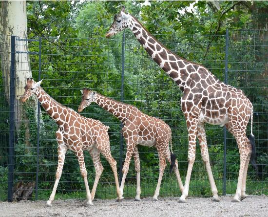 lucknow zoo animals pics