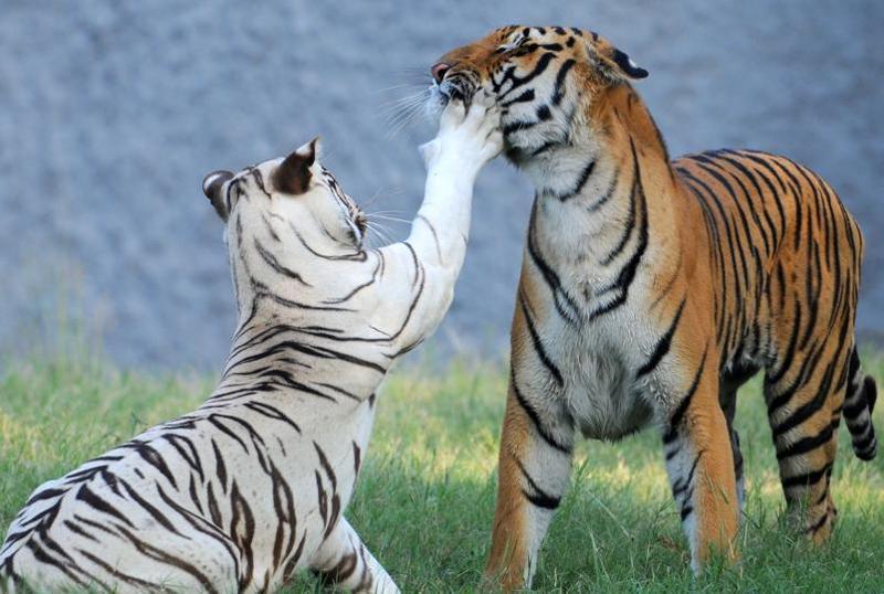 chhatbir zoo pics, attraction