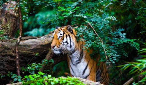 Assam zoo images, attraction