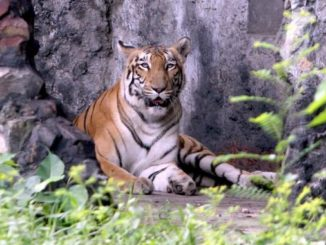 alipore zoo location, images