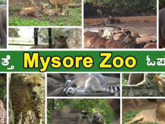 mysore zoo location