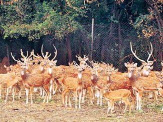 deer park hauz khas delhi location
