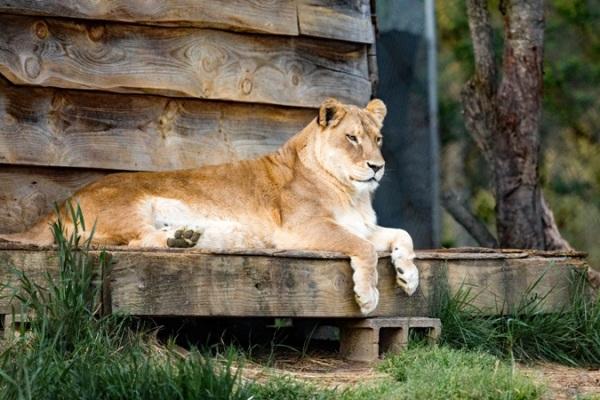 chennai zoo attraction