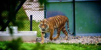 Kamla nehru zoo Ahmedabad Location, timing, entry fees
