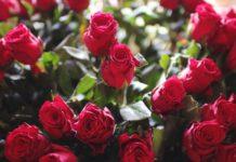 valentine's day celebration in delhi
