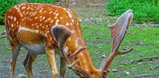 hisar deer park location, timing, entry fees