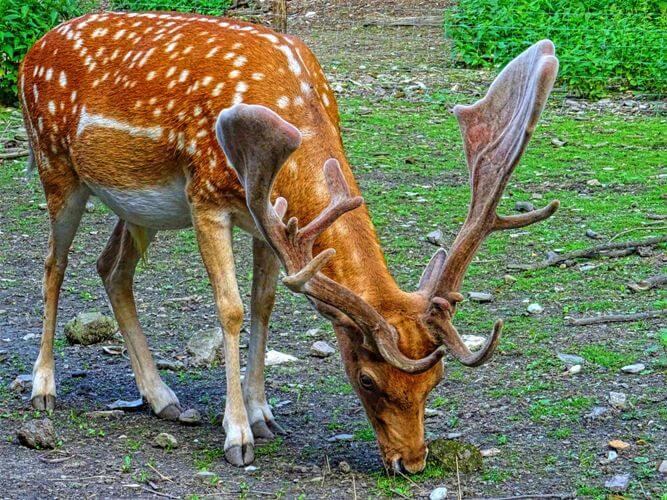 hisar deer park location, timing, entry fees