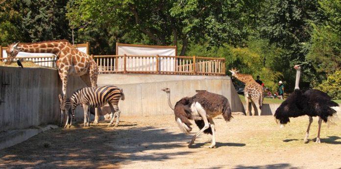 rajiv gandhi zoo pune